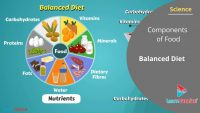 Components of Food Class 6 Science – Balanced Diet