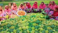 200 KG Broccoli Curry Recipe – 100% Vegetarian Food Cooking In Village – Special Vegan Curry